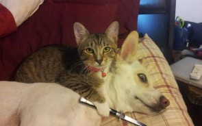 This Cat Threats The Dog With Knife To His Neck Throat