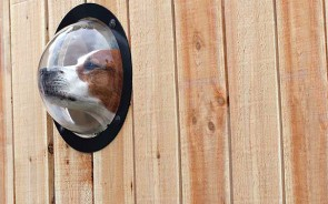 inventions-for-dog-lovers-12