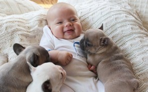 Overall, babies with no dog at home were healthy 65 percent of the time, according to the parental logs.